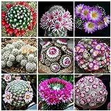 143.綺麗な花が咲くことで知られる花サボテン。その中でも最も種類が豊富な『マミラリア属』の新鮮種子20粒+α。(Cactus Mammillaria) [並行輸入品]