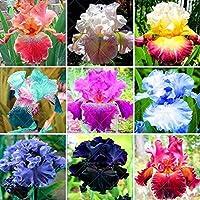 13:のための50個/袋珍しいアイリス種子盆栽花24色家宝アイリス花植物