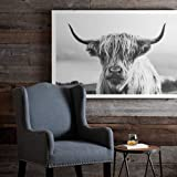 Scottish Highland Cow Art Print Poster Canvas Print Wall Art, Unframed, for Wall Decor Home Decor (cow7, 16x24 inch)