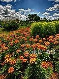 光景sight #5: 癒しを求めた花や風景の写真