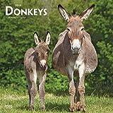 Donkeys 2019 Calendar (Browntrout Wandkalender)