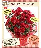 2018母の日ギフト カーネーション花鉢5号 5月9-13日の期間でお届け FKHH