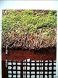 日本の美術〈19〉茶室と露地―ブック・オブ・ブックス