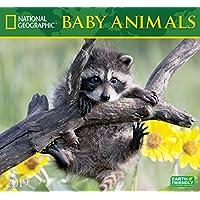 National Geographic Baby Animals 2019 Calendar