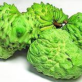 沖縄県産 アテモヤ お試し 3玉 (約600g前後) あてもやは森のアイスクリームと言われ珍しいフルーツ (12月頃)