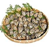 大分県杵築市産 殻付 活き冬牡蠣 (マガキ) 105個