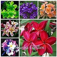 販売! 100個/袋プルメリア盆栽、フランジパニ、レイの花、珍しいエキゾチックな卵の花パーフェクト色DIYホームガーデン:混合