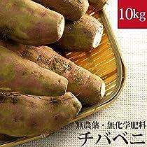 チバベニ さつまいも 10kg 千葉紅 無農薬・無化学肥料・千葉県産