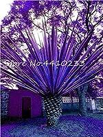 販売!10本虹の日本のボトルの椰子の盆栽の木エキゾチックな植物熱帯のオーナメントのバルコニーの木の植物庭のための盆栽の鉢:3