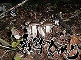 【国産】【天然】きのこ シモフリシメジ (黒シメジ・銀茸) 150g