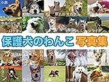 保護犬のわんこ 写真集 (「保護犬のわんこ」プロジェクト)