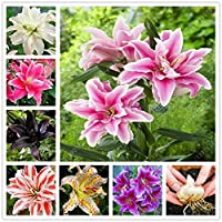 種子のパッケージではありません植物:4:1シード真リリーダブルユリの花の種子(未ユリシーズ)盆栽種子シードをシード