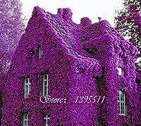 虹のクライミング植物による100 PCS香水coulourfulフラワーロッククレッセ、ホームガーデンのフラワーヤード送料無料:4
