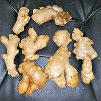 1ポンドの根茎:生姜の根のハーブ、庭シード、1、3または根茎の5ポンド(シーズ)