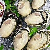 生鮮殻付牡蠣3キロ 加熱調理用 約20個前後 広島牡蠣の最高級大粒ブランド牡蠣「かき小町」は、一年中が旬!