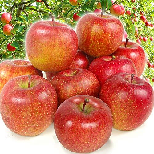 国華園 青森産 ご家庭用サンふじ 10�s1箱 りんご