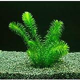 (水草)無農薬アナカリス メダカ 金魚藻 国産 オオカナダモ(10本)
