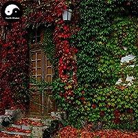 ボストンアイビーツリーSemente 400個の種子つる木Parthenocarpy