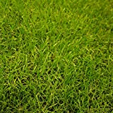 芝の種(業務用):西洋芝ペレニアルライグラス・PNW 1kg[草丈30~50cm 極濃緑、極緻密][ヘイローの後継品種]