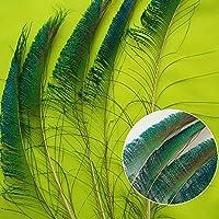 Merssavo 10個の本物の自然ピーコックテールフェザーホームルームインテリアDIY美しい(L)