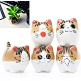 Cat Succulent Planter - 5 Pack Mini Cat Pots for Small Plants Animal Lovers Home and Office Desk Decoration