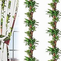 窓美人 プランツ 幸福の木 デザインカーテン 2枚組 幅100×丈200cm 形状記憶付き 高級フルダル生地
