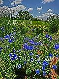 光景sight #6: 癒しを求めた花や風景の写真