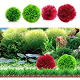 200pcs Mini-Leaf Grass Water Aquatic Plant Bonsai Fish Tank Plants Dwarf Pearl Plants Aquarium Grass Bonsai for : 13