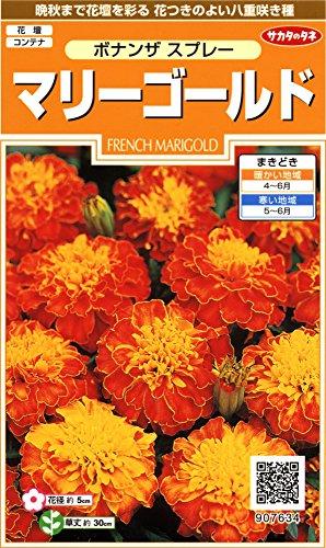 サカタのタネ 実咲花7634 マリーゴールドボナンザ スプレー 00907634