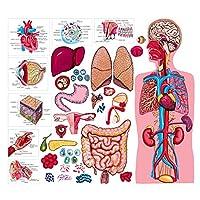 LITTLE FOLKSビジュアルLFV22312 THE HUMAN BODY&解剖FLANNELBOA-RD SET