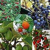 里山の果樹5種セット*(山葡萄・夏グミ・クコ・サルナシ・カジイチゴ)[苗木]