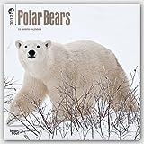 Polar Bears - Eisbaeren 2017