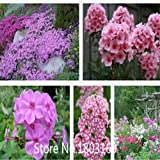 鉢植えの花の種の宿根草、フロックスの種、香りの芝桜、約500粒子6レアミックスカラーズ
