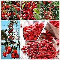 ガーデンDIYのクコChinenseハーブ健康給付セイヨウカリン、1000個赤ゴジベリージューシークコオーガニック家宝フルーツ工場:300個