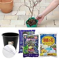 (観葉)私の果樹園 ~ブルーベリー 西日本向き収穫セット~(苗木2本・土・プランター・肥料他11点セット) 家庭菜園 [生体]