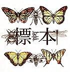 標本 [TYPE-B](近日発売 予約可)
