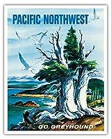 太平洋岸北西部 - グレイハウンド - ビンテージな世界旅行のポスター によって作成された S.フレミング c.1958 - アートポスター - 41cm x 51cm