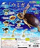 地球生命紀行 カプセルコレクション ウミガメ&サンゴ礁を彩る生き物 ガチャ エポック(全8種フルコンプセット)
