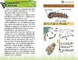 イモムシのふしぎ ちいさなカラダに隠された進化の工夫と驚愕の生命科学 (サイエンス・アイ新書) 画像