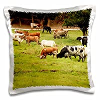 3drose Danita Delimont–Cows–Texas Longhorn Cow牛in Green Pasture–us44pwo0003–PiperAnneウースター–枕ケース 16x16 inch Pillow Case pc_147145_1