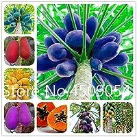 10個パパイヤ盆栽、DIYの庭の装飾のために甘い野菜ツリーSeedss盆栽ジャルダン木Sementes:混合