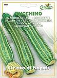 野菜の種 ズッキーニ・ナポリ