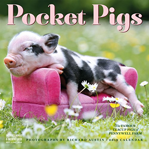 Pocket Pigs 2019 Calendar: The Famous Teacup Pigs of Pennywell Farm