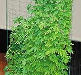 DAIM サイドロープ付 緑のカーテンネット 3.6×5m 10cm角目