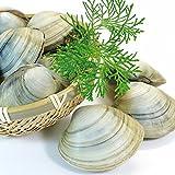 活きホンビノス貝(サイズ無選別)2kg入 白はまぐり 送料無料 活物専門商社【魚活】活き物のため配送日時のご指定をお願いします。