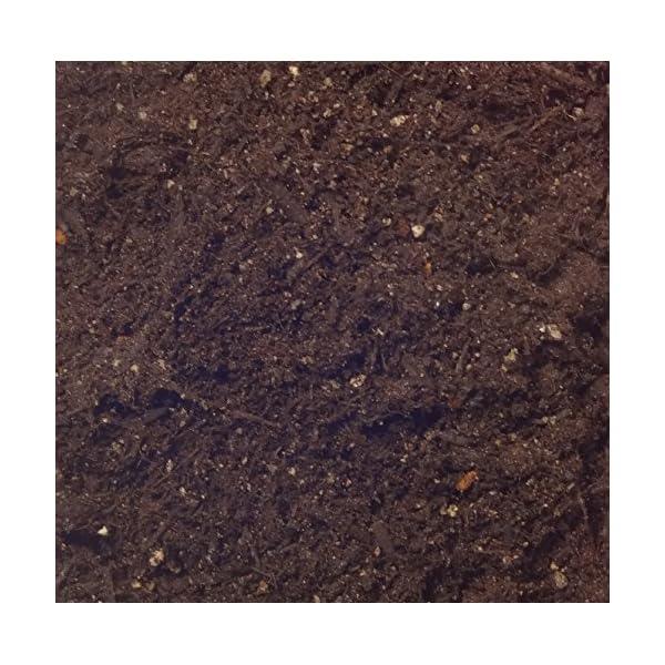 自然応用科学 花と野菜の土 W効果 25Lの紹介画像3