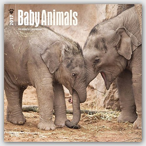 Baby Animals 2017 Calendar (Square Wall)