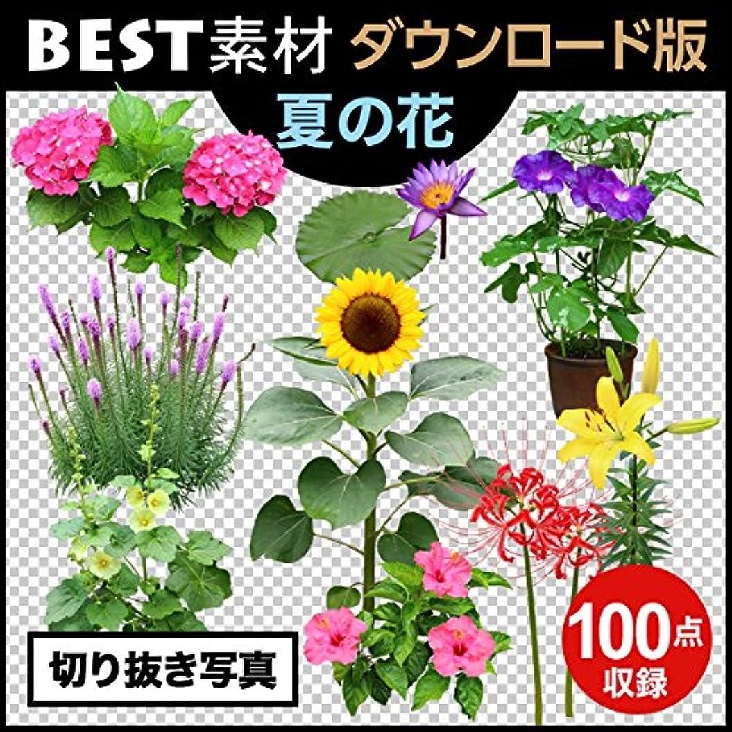 奇妙なインスタンスクッション【BEST素材】切り抜き写真_夏の花|ダウンロード版