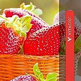 61IR62S8h%2BL. SL160 - 【レビュー】Killer Kustard Strawberry 100ml(キラー・カスタード・ストロベリー)~定番のバニカスにみんな大好きいちごをプラス(*´ω`*)~【リキッド】