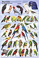 (24 x 36) Parrots Poster 【Creative Arts】 [並行輸入品]